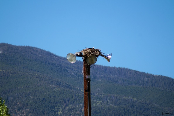 You can barely see the head of an osprey sitting on the nest.